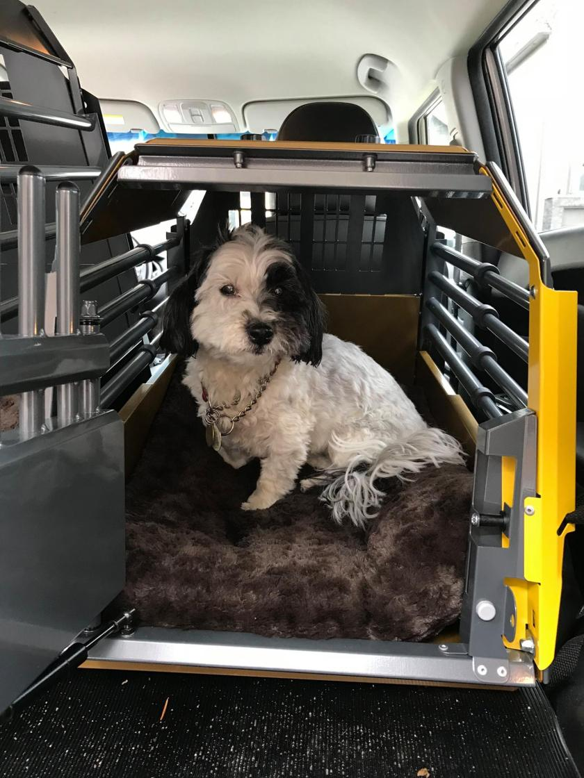 Dog in crash tested dog crate for road trips with your dog.