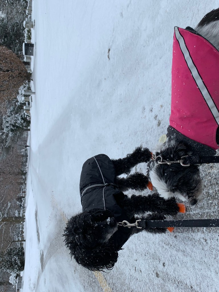 Dogs wearing  their dog DogGone Smart Coat and RC Pet dog coats