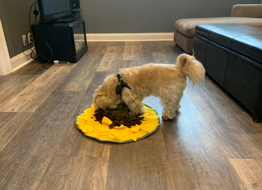 Dog playing with the Pet Snuffle Mat