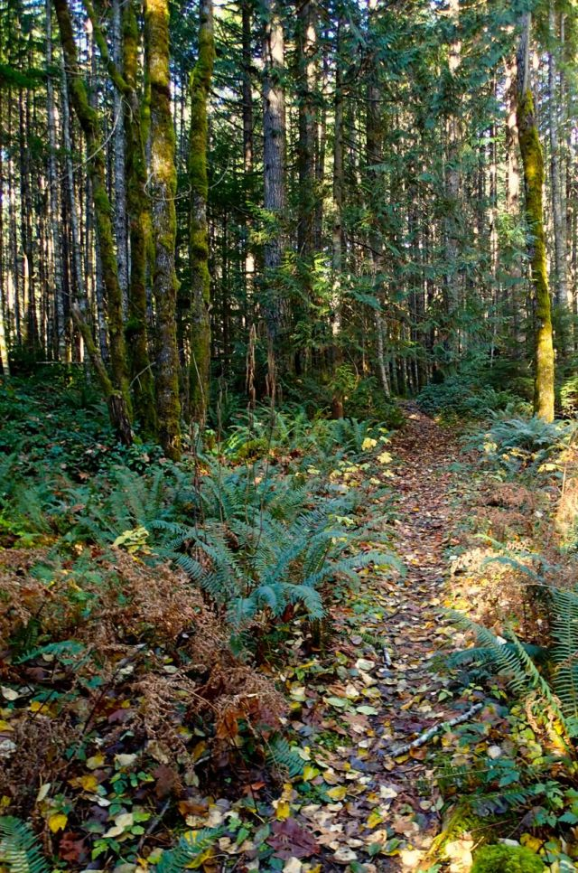 Brohm Lake hiking trail