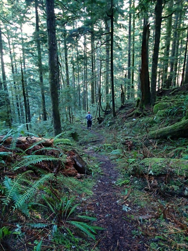 Big Cedar trail on lower Mount Fromme