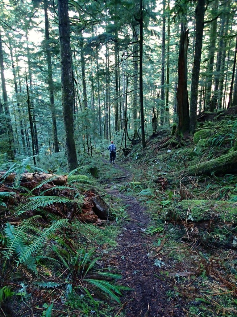 Trail to the Big Cedar and Kennedy Falls near Vancouver