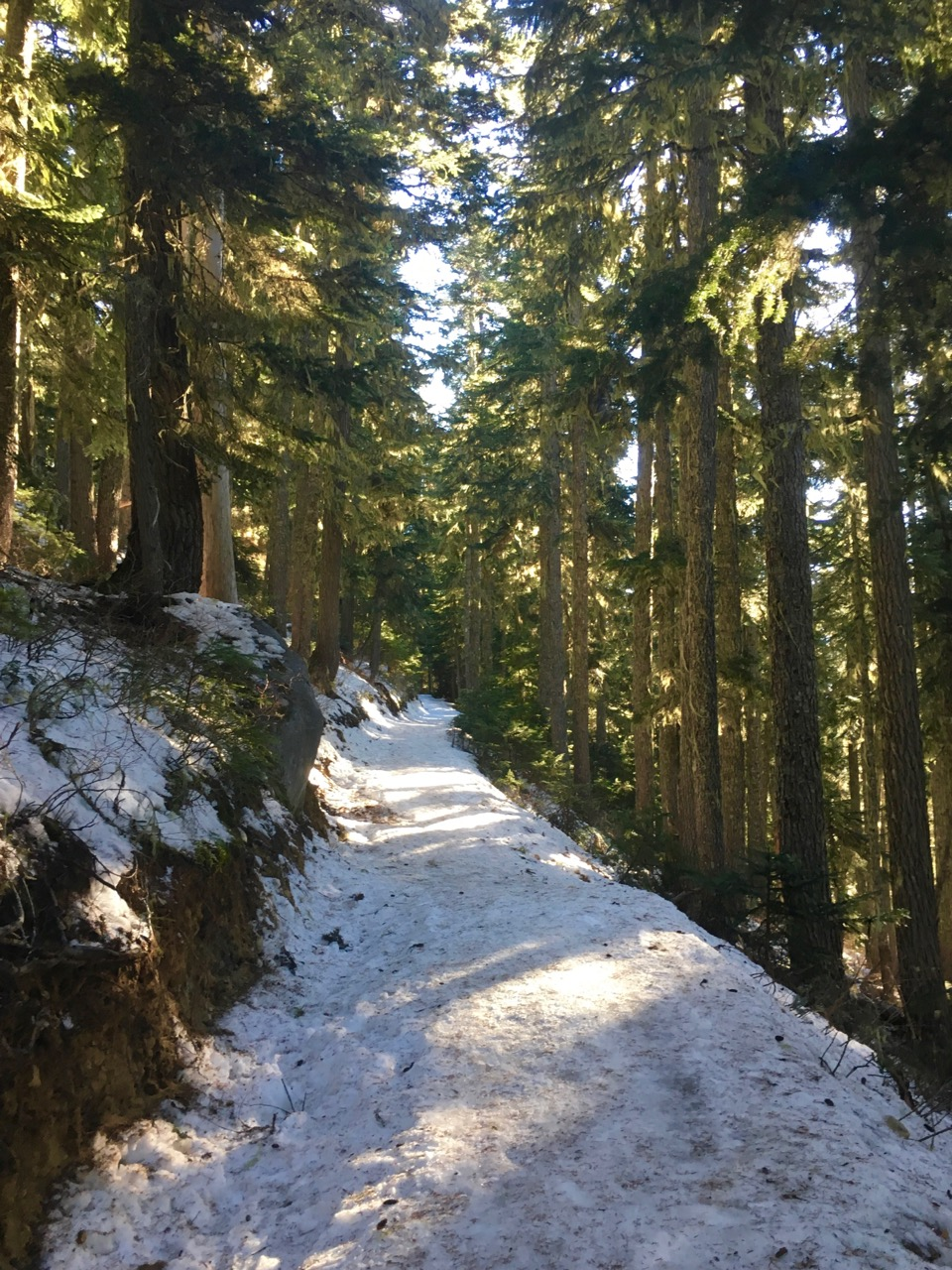 Garibaldi Lake trail in the winter.