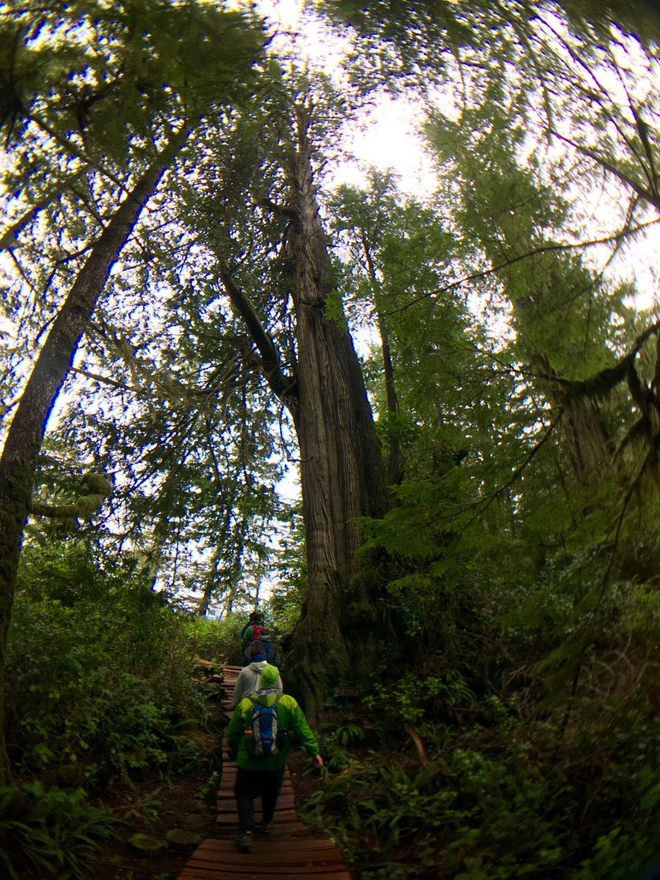 Big Tree Trail, Meares Island, Tofino BC