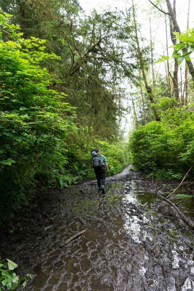 The muddy trail to Shi Shi Beach. A complete guide to hiking and camping at Shi Shi Beach.