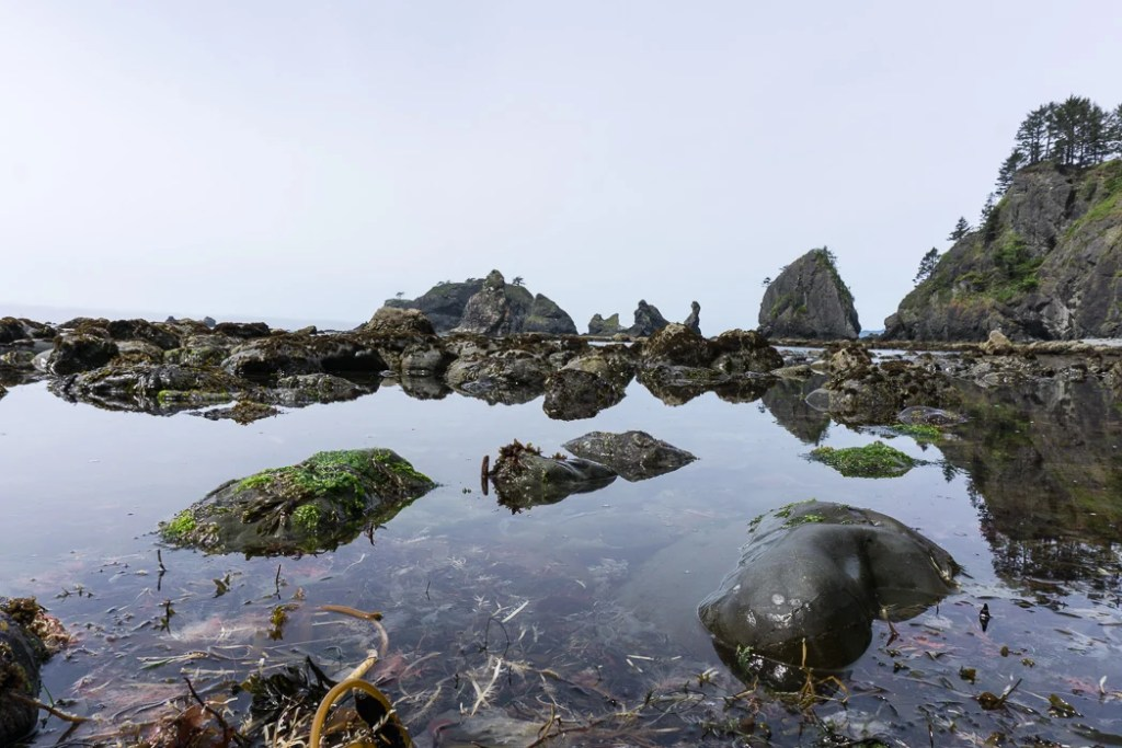 Tide pool near Point of the Arches on Shi Shi Beach. Complete guide to hiking and camping at Shi Shi Beach.