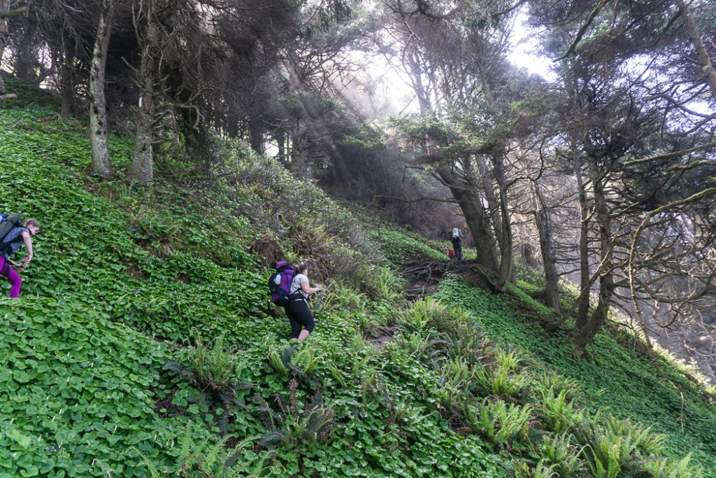 Climbing the steep section of trail up into the forest from Shi Shi Beach. A complete guide to hiking and camping at Shi Shi Beach.