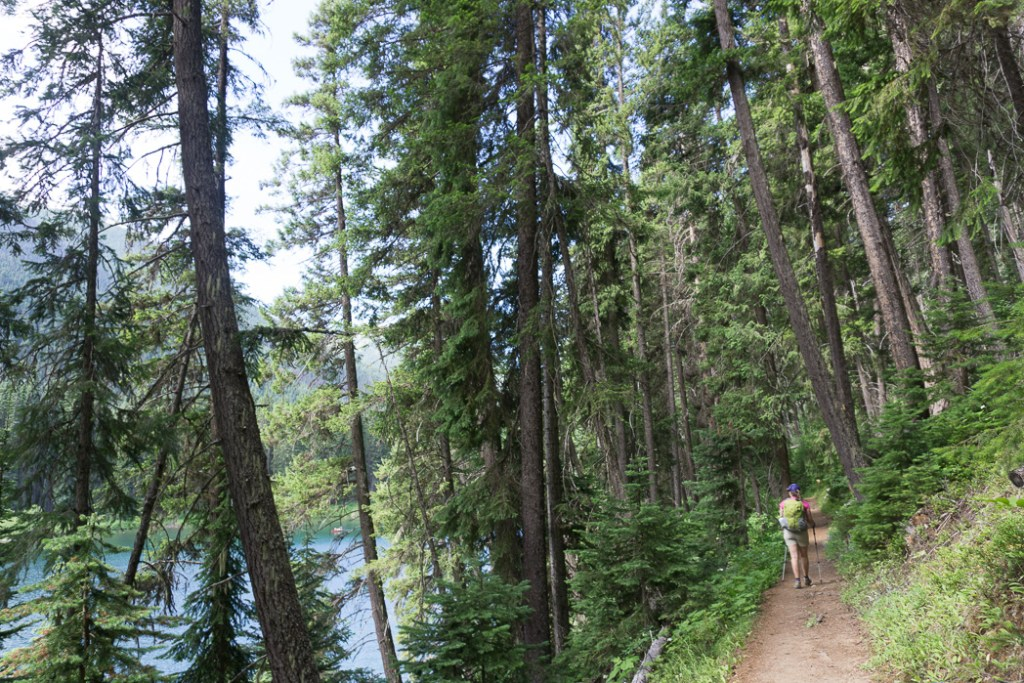 Tips for hiking in hot weather: choose a shady hike.