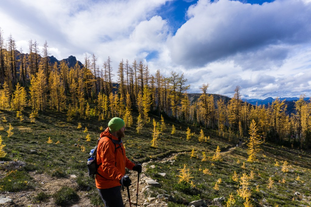 Golden larches on the Frosty Mountain trail. Hike to the gorgeous Frosty Mountain larches in British Columbia, Canada. Go hiking in the fall to the see the larch trees change colour in Manning Park, BC, Canada.