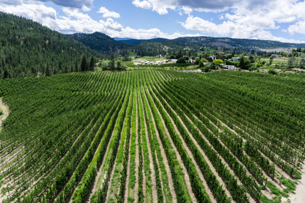 Vineyards near Trout Creek in Summerland. Explore Summerland's wineries by bike with this self-guided tour.