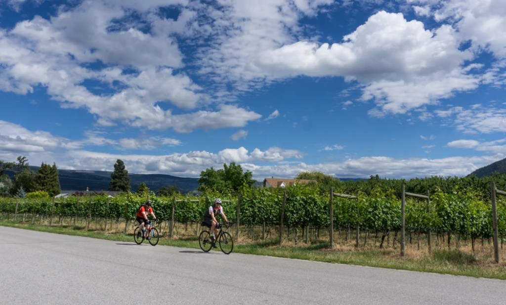 Biking past vineyards near Summerland. Explore Summerland's wineries by bike with this self-guided tour.