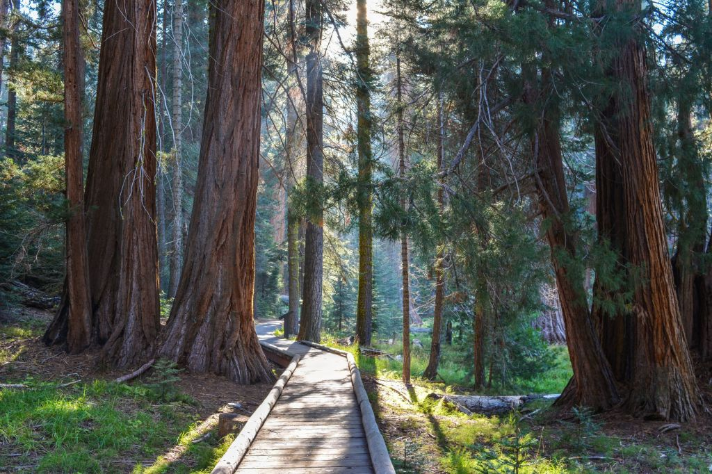 Walking near the Giant Forest Museum in Sequoia National Park - just one of many things to do in Sequoia and Kings Canyon National Parks.