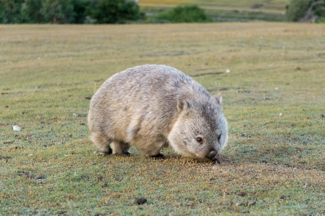 Best Places To See Wildlife In Tasmania Happiest Outdoors