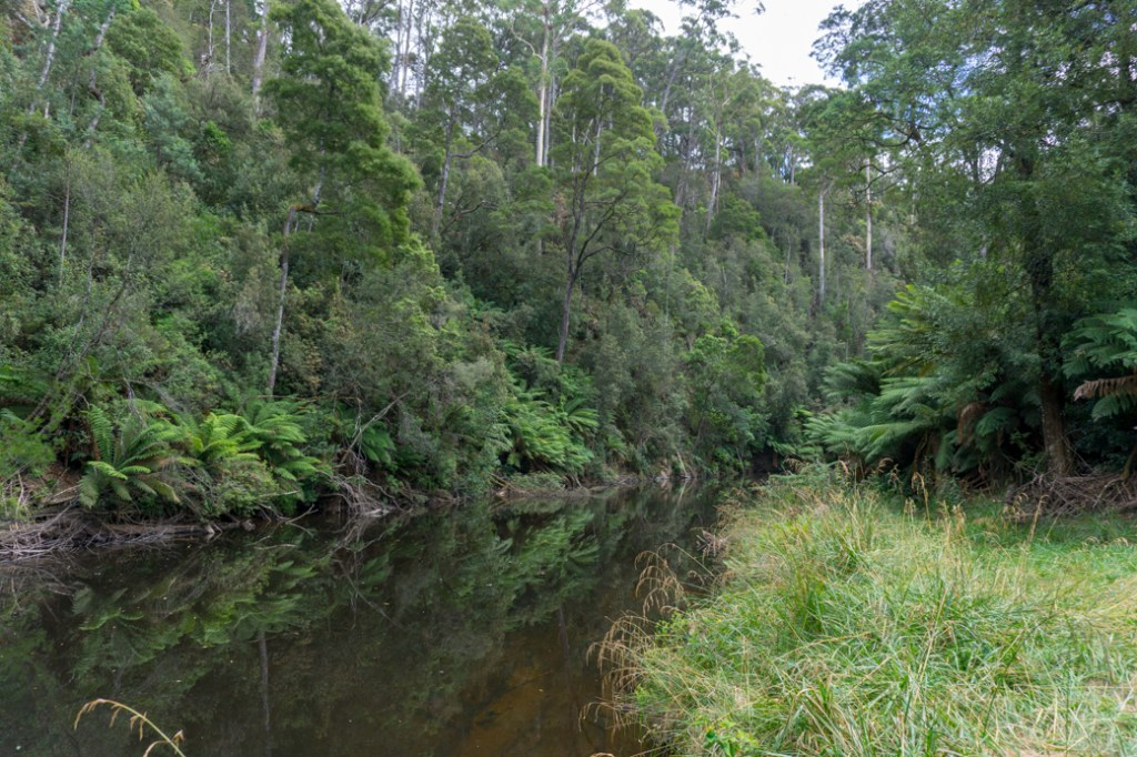 Fern Glade in Burnie is a great place to spot platypus. It's just one of the best places to spot wildlife in Tasmania.