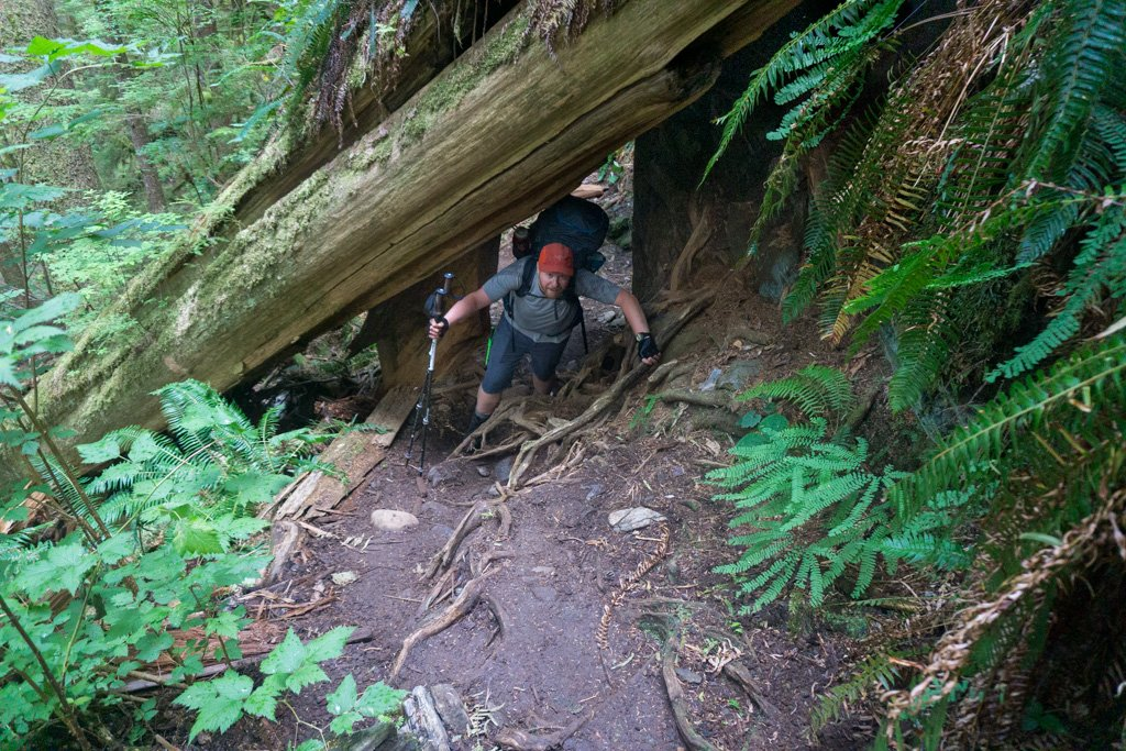 A hiker scrambles under a log on the south end of the West Coast Trail