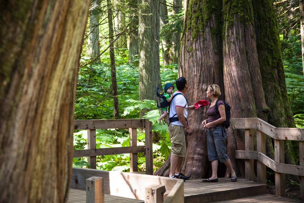 Giant Cedars Boardwalk in Mount Revelstoke National Park