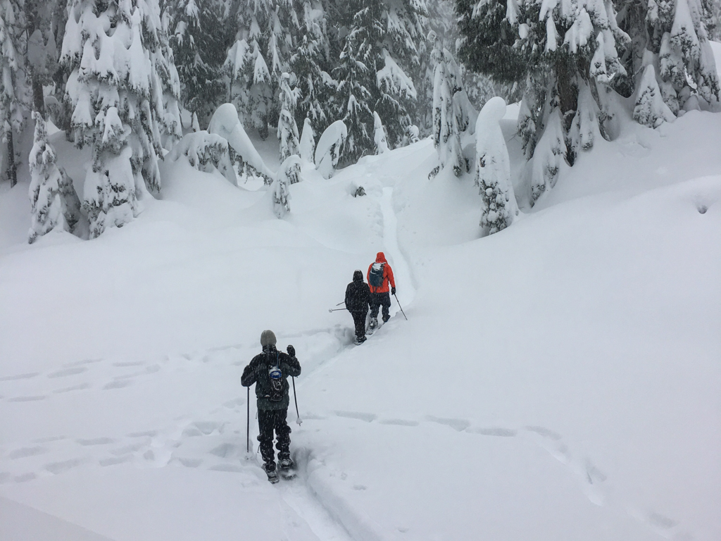 Three snowshoers on a snowy trail while snow falls