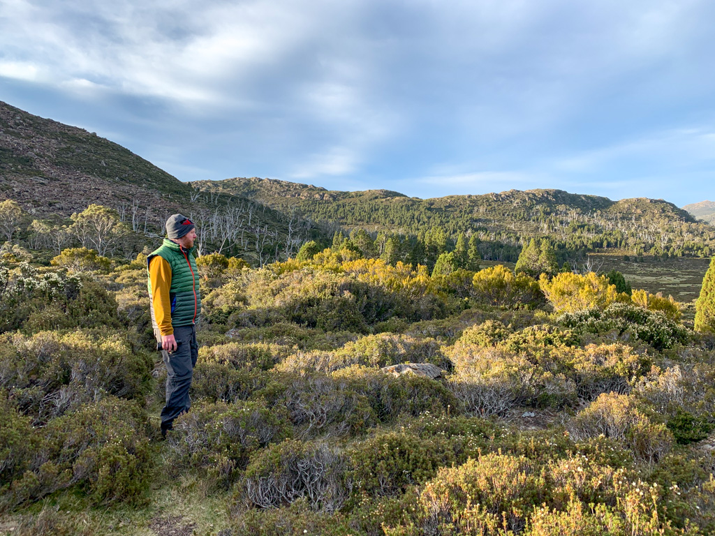 A hiker stands in scrubby bushes in Tasmania's highlands