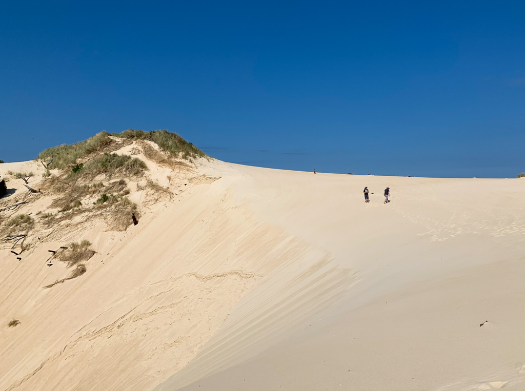 People standing on a dune at Henty Dunes