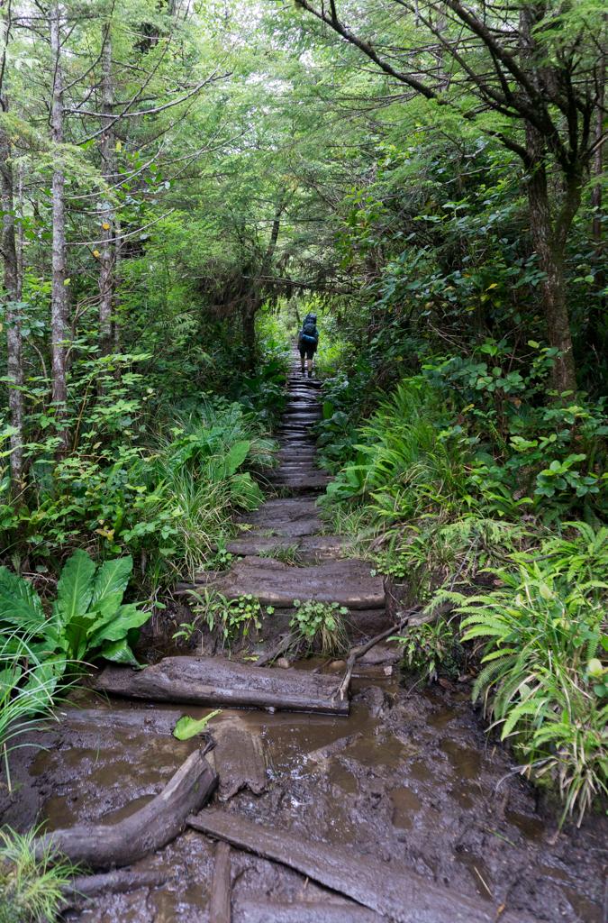 Cape Scott Trail between the trailhead and Eric Lake