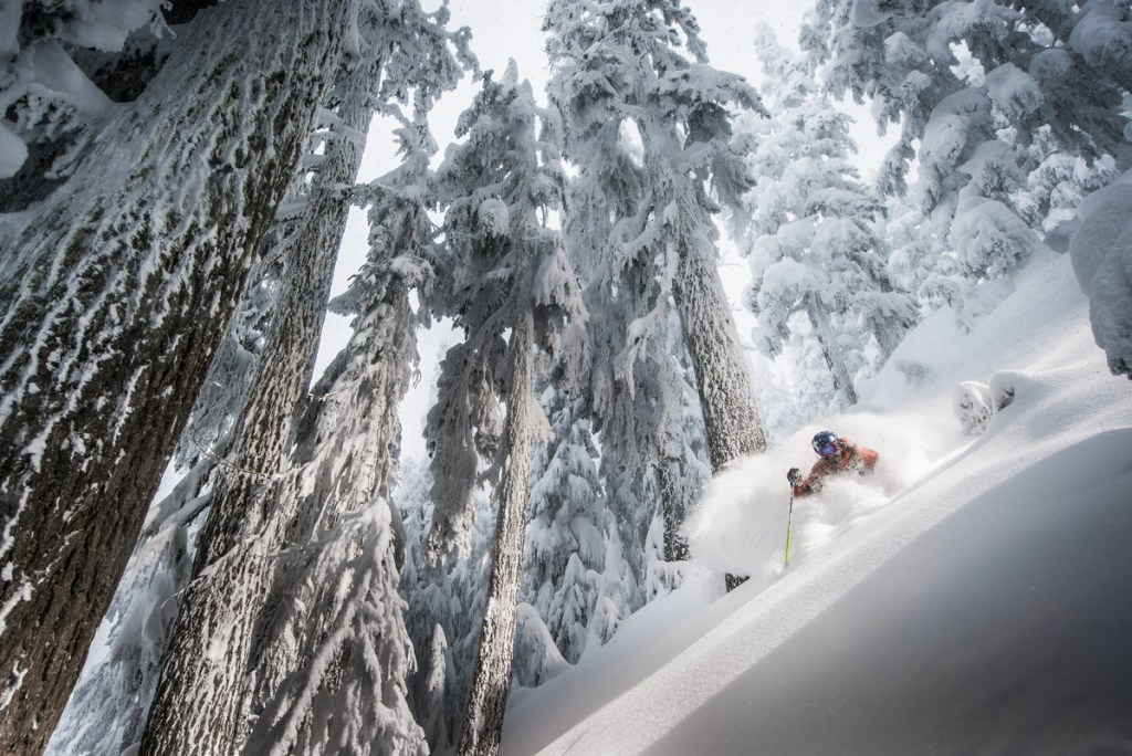 A skier skiing in between trees on a powder day at Whistler