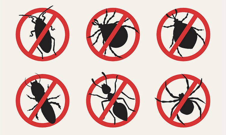 4 Essentials for Controlling Pests Inside and Outside of Your Home