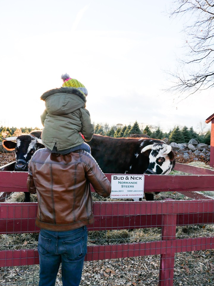 Kyle and Marlowe martino visit with the cows at Maple Row Farm