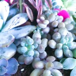 8 Places To Buy Succulents Online That I Ve Tried Happily Ever After Etc