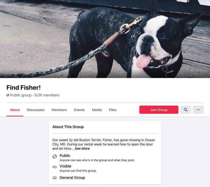 Lost dog Facebook group