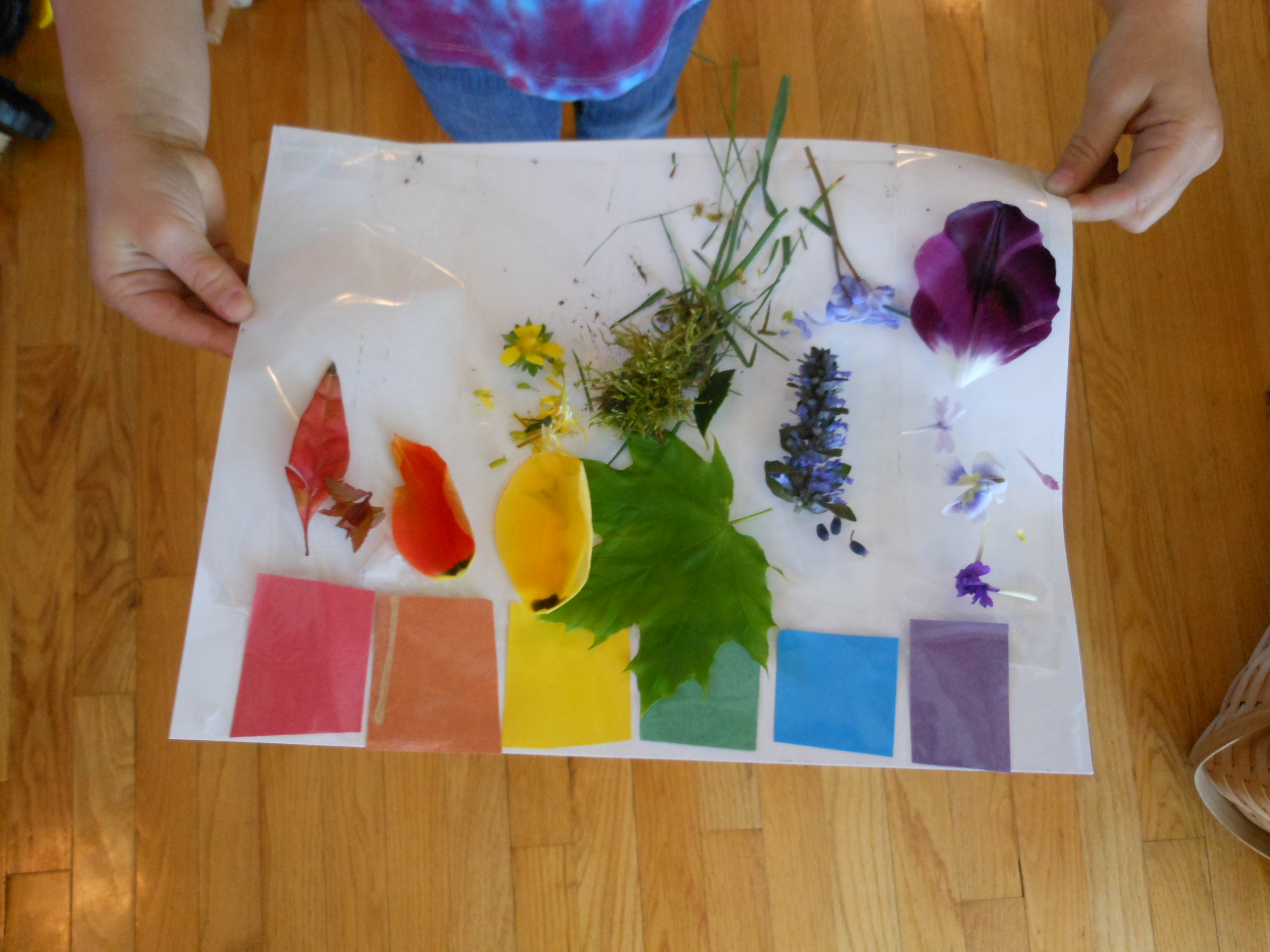 Nature Themes For Preschoolers Gallery