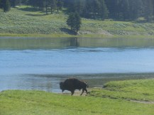 Yellowstone, Banff & Jasper, Brent & Luci's 041