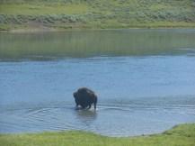 Yellowstone, Banff & Jasper, Brent & Luci's 042