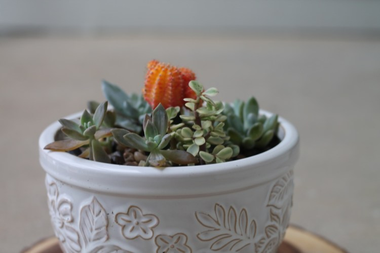 DIY Mini Succulent Garden   read more at happilythehicks.com