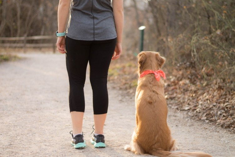 Picking a Training Program - Half Marathon Series   read more at happilythehicks.com