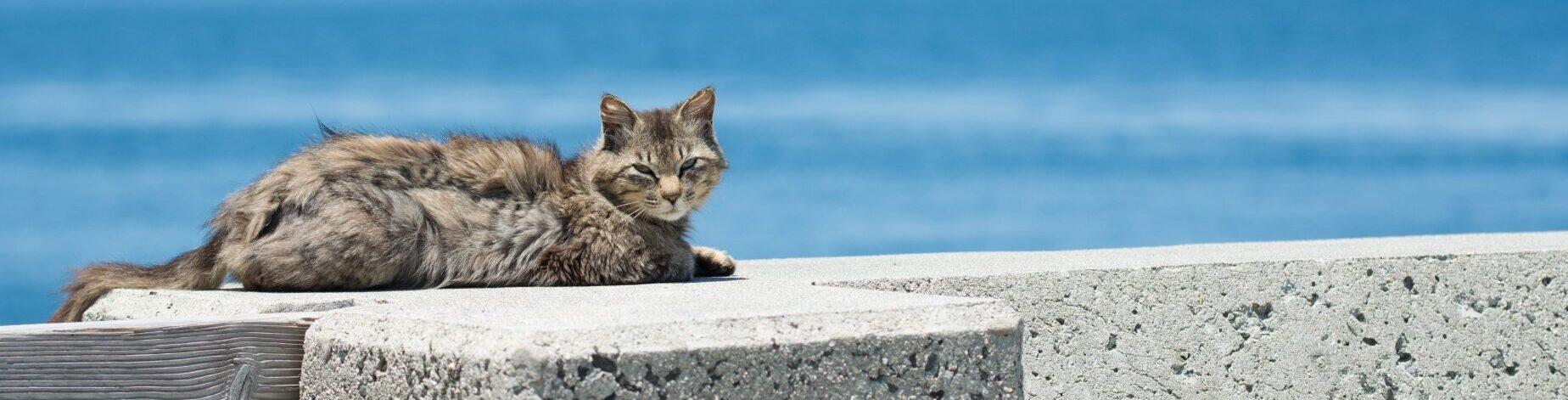ハピネスギフトの海と猫の写真