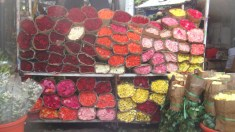Piles and piles of roses for less! Who wouldn't love this?