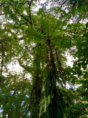 A fern tree from below.