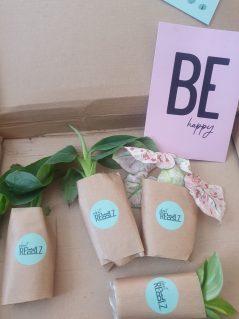 plantenstekjes - Plant Rebelz - Stekkie box