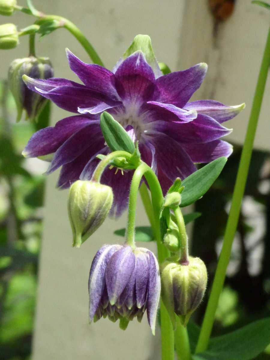 Late #Spring #Garden #Flowers