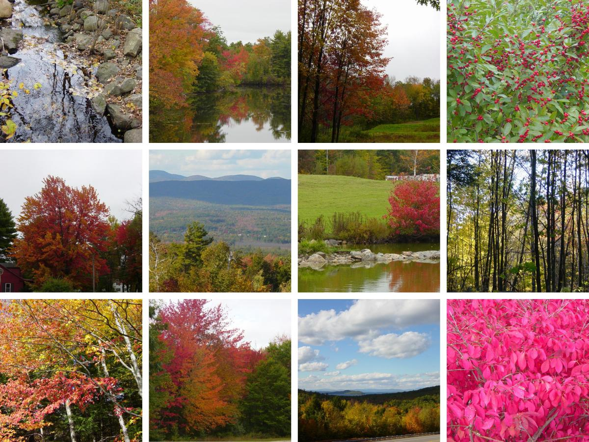 #NH #Autumn #Photography Galleries