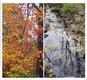 Fall Double Screenshotscreenshot-photos.google.com-2018.10.17-10-44-41