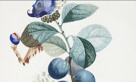 0c040-s-dali-botanical-art-large300screenshot