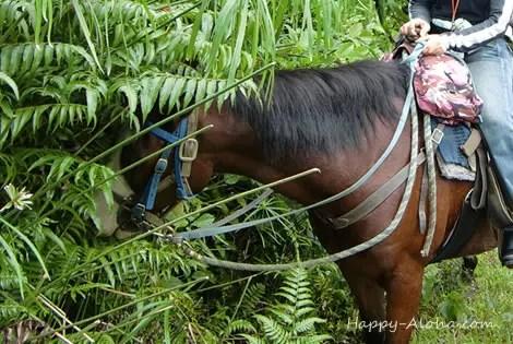 自分勝手な馬
