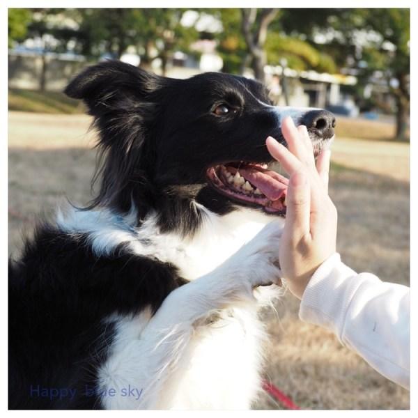 長女と愛犬Jの休日の楽しみ方。(ディスク&シャンプー)