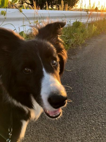 愛犬Jとの散歩