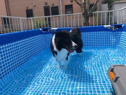 今年も愛犬とプール遊び!