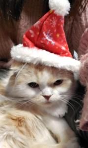 サンタ帽子のクリ
