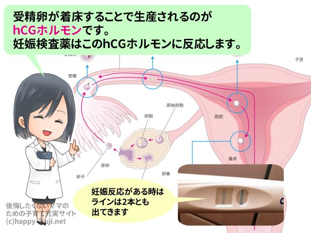 201611_pregnancytest2