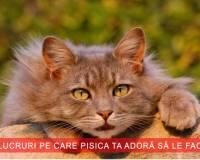 6 lucruri pe care pisica le adora