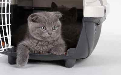 Wie kommt die Katze in die Box?